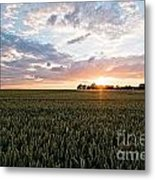Grain Field Metal Print