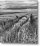 Grain Field Tracks Metal Print