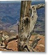 Grand Canyon And Dead Tree 2  Metal Print
