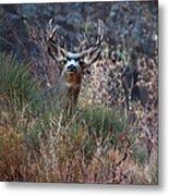 Grand Canyon Deer Metal Print