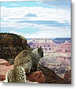 Grand Canyon Squirrel Metal Print