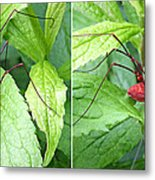 Granddaddy Spider In 3d Stereo Metal Print