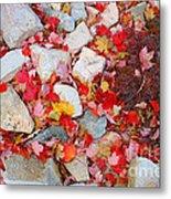 Granite Rocks Among Maple Leaves Metal Print