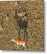 Grants Gazelle Metal Print