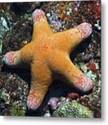 Granulated Seastar Metal Print by Science Photo Library