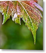 Grape Autumn Leaf Metal Print