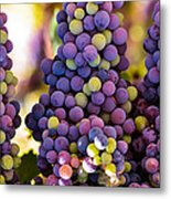 Grape Bunches Wide Metal Print