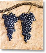 Grape Vine Metal Print