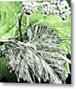 Grape Vine Leaf Metal Print