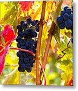 Grapes And Autumn Leaves, Napa California Metal Print