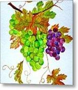 Grapes Metal Print by Elena Mahoney