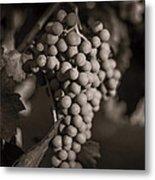 Grapes In Grey 2 Metal Print