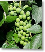 Grapes On The Vine Metal Print