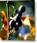Grapes On The Vine In Square  Metal Print by Neal Eslinger