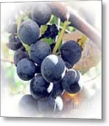 Grapes On The Vine Metal Print by Kathleen Struckle