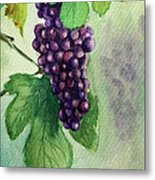 Grapes On The Vine Metal Print by Prashant Shah