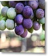 Grapes On Vine Metal Print