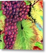 Grapes On Vine Pastel Metal Print
