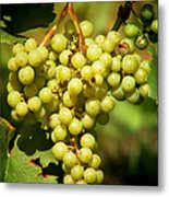 Grapes - Yummy And Healthy Metal Print