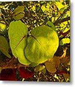Grapetree Canopy Metal Print