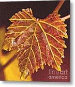 Grapevine In Fall Metal Print