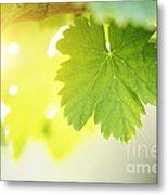 Grapevine Leaves Metal Print