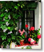 Grapevines And Geraniums Around A Window Metal Print