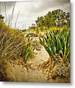 Grass And Sand Of Elafonisi Metal Print