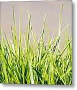 Grass Blades Metal Print