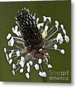 Grass Bloom Metal Print