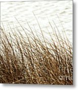 Grass Down By The Shore Of Virginia Beach Metal Print
