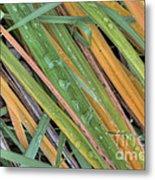 Grass Droplets Metal Print