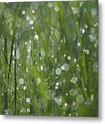 Grass Fairies... Metal Print