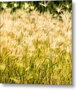 Grass Feathers Metal Print