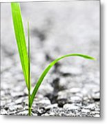 Grass In Asphalt Metal Print by Elena Elisseeva