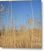 Grass In Motion Metal Print