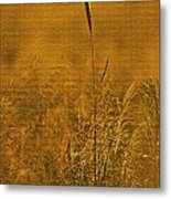 Grass In The Light Of The Rising Sun Metal Print