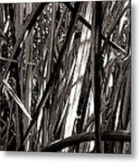 Grasses 2 Metal Print by Colleen Cannon