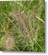 Grasses At Spaulding Pond Metal Print