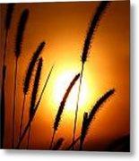 Grasses At Sunset - 1 Metal Print