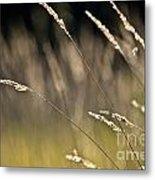 Grasses Blowing Metal Print
