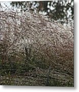 Grasses Glittering With Thousand Of Rain Drops Metal Print