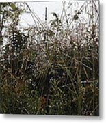 Grasses Glittering With Thousand Of Raindrops Metal Print