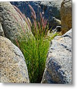 Grasses In Oasis On Borrego Palm Canyon Trail In Anza-borrego Desert Sp-ca Metal Print