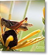 Grasshopper Antena Up Metal Print