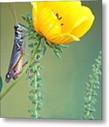 Grasshopper Be Still Metal Print