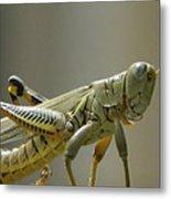 Grasshopper In Profile Metal Print