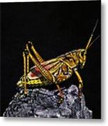 Grasshopper Portrait. Blue Cypress Lake Metal Print
