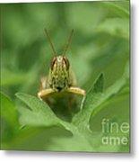 Grasshopper Portrait Metal Print