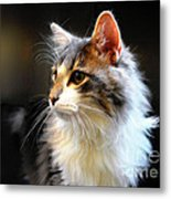 Gray And White Cat Metal Print